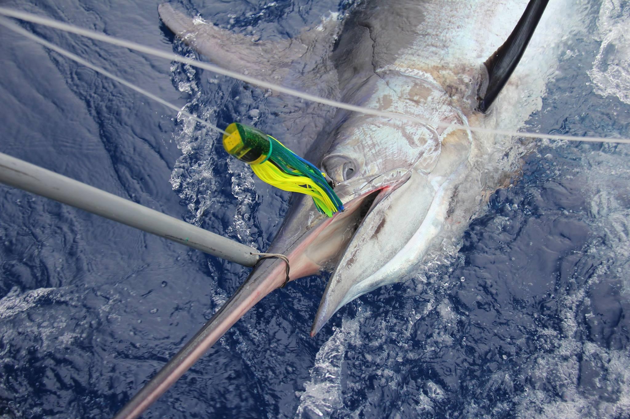 Marlin fishing madeira big game fishing for Tuna fishing games